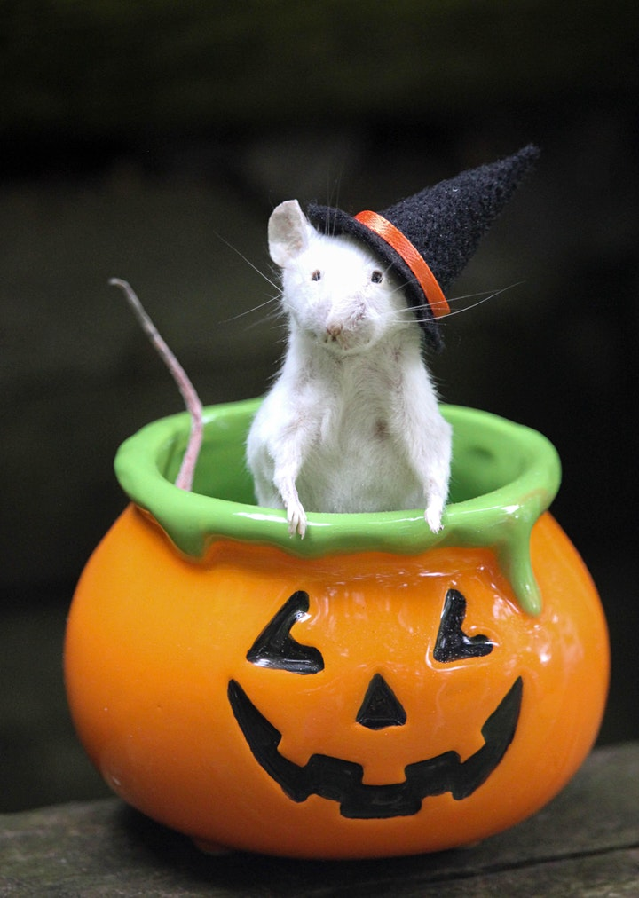 Mouse Taxidermy Class - Halloween Edition image