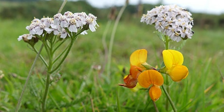 Foraging workshop in collaboration with Lisa Cutcliffe tickets