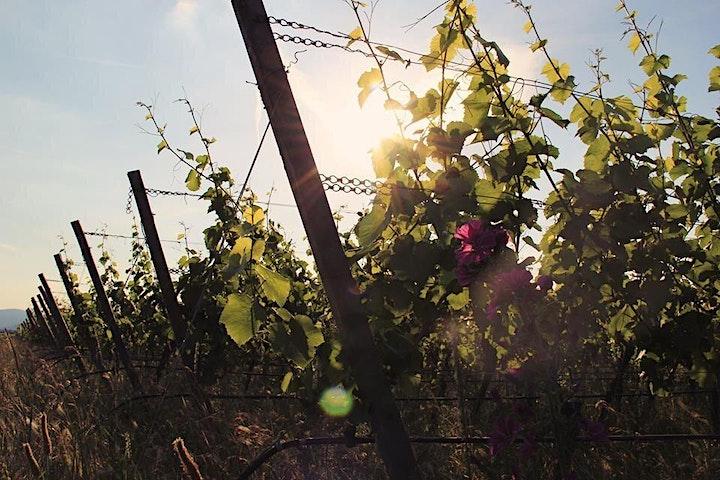 Afbeelding van Zondag 25 juli Duitsland Wijnproeverij met Vincent Eymann