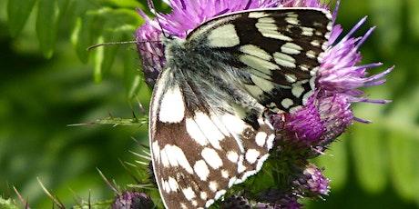 Butterfly Walk at RSPB Arne tickets