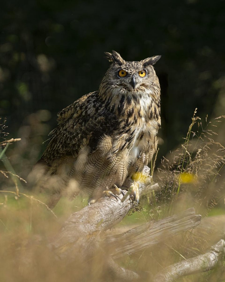 Falcon Photography - In the Field with the Falconer image