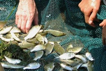 Summer on the Hudson: Great Hudson River Fish Count tickets