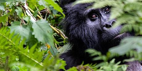 3 Day Uganda Gorilla Tour Bwindi Impenetrable Forest tickets