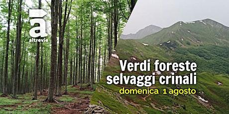 Verdi foreste, selvaggi crinali biglietti