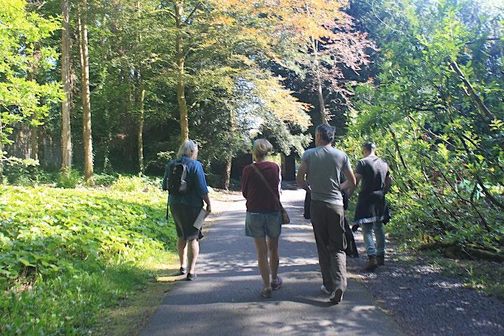 Stories and Wisdom - a woodland walk image