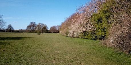 Wellbeing Walk at Manor Park tickets