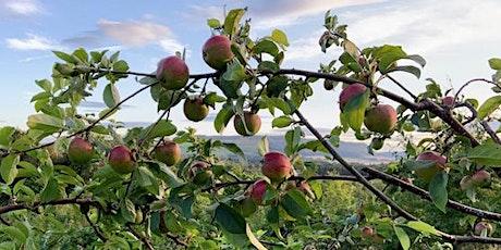 A Walk in Portmoak Community Orchard tickets
