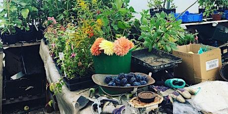 Summer Nutrition in the Garden - Workshop and Dinner tickets