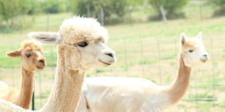 National Alpaca Farm Days tickets