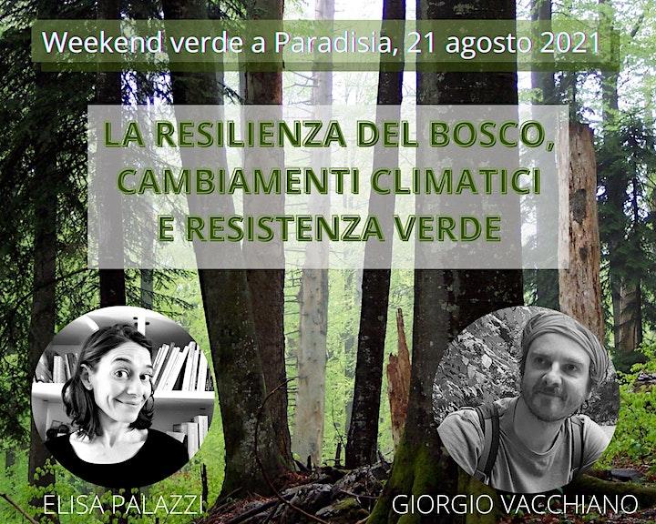 Immagine LA RESILIENZA DEL BOSCO, CAMBIAMENTI CLIMATICI E RESISTENZA VERDE
