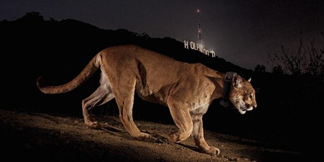 P-22 Day Festival and #SaveLACougars tickets