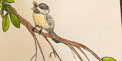 Drawing Nature Series – Sundays Class #2