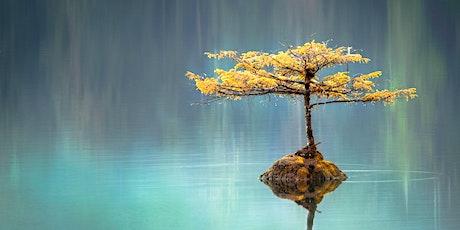 8/11/21 - Reiki Energy Healing Sampler - Harmonizing and Balancing tickets
