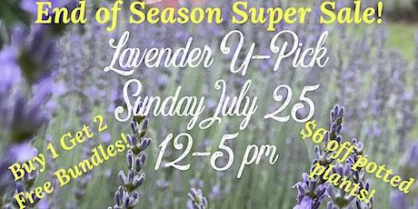Lavender U-Pick - End of Season Sale! tickets