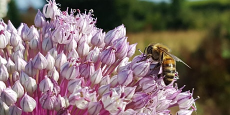 Exeter Beekeepers Open Day tickets