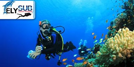 Discover Scuba Diving WorkShop - Lezione gratuita di immersione biglietti
