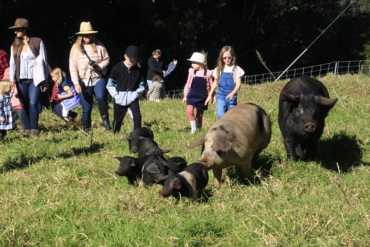 Family Friendly Farm Tour Lots of farm animals and cute maremma puppies image