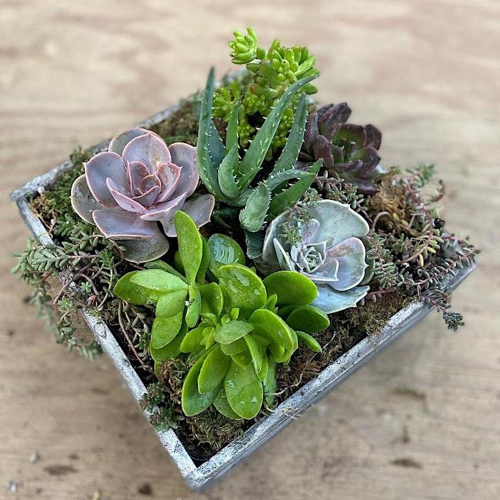 Succulent Wooden Box Planter image