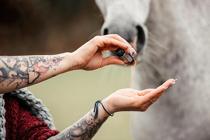 Animal Essential Touch Methode - Zertifizierungskurs Pferd: Bild