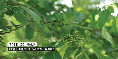 Tregaron Conservancy Tree Walk with Capital Nature tickets