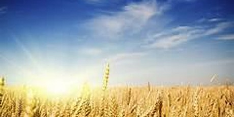 Summer Harvest Celebration: The Earthly Shabbat of Late Summer tickets