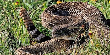 Sept 11 Nampa Rattlesnake Avoidance Training for Dogs tickets