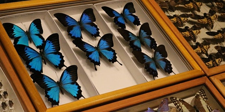 Special Access: Entomology Collection at the Academy of Natural Sciences tickets