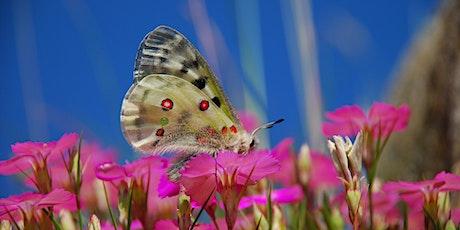 Farfalle del Monviso - Butterfly Monitoring Scheme Italia biglietti