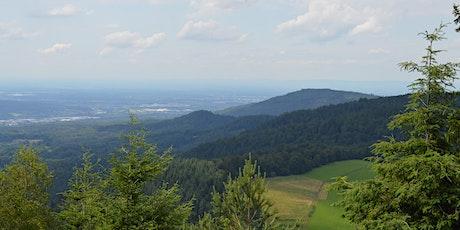 Wandern für Alle: Bad Herrenalb – Bernsteinfels - Mauzenberg Tickets