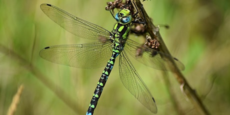 Damsels and Dragonflies tickets