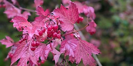 Autumn Wildlife Stroll (Hardwick Woods) tickets