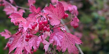 Autumn Wildlife Stroll (Gamlingay Wood) tickets