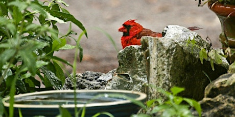 Backyard Birding  FREE Zoom Online Class - Tues. Aug. 24th, 12pm tickets