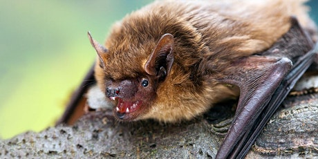 Fieldfare Bat Safari - Huntingdon tickets