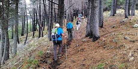 NaturArte Trekking Urbano | verso la Pineta|PNAL|Brienza biglietti