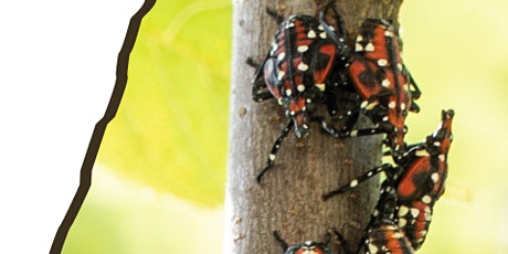 Spotted Lantern Fly Informational Presentation tickets