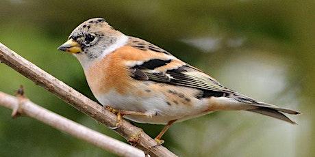 Bird ID at Lackford Lakes (EWC 2806) tickets