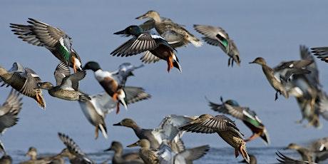 Autumn bird ID at Lackford Lakes (EWC 2806) tickets
