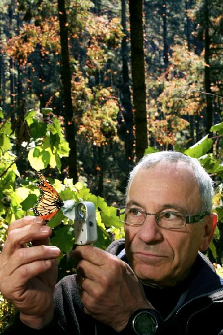 Monarch Butterfly Program image