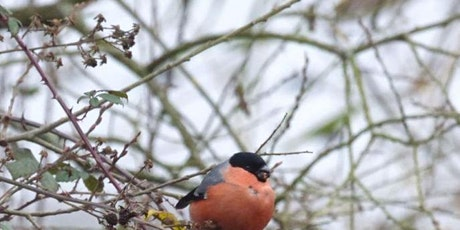 Winter bird ID at Lackford Lakes (EWC 2806) tickets