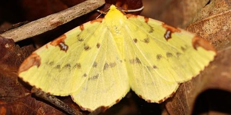 Moth Trap Morning - Finglandrigg Woods NNR tickets