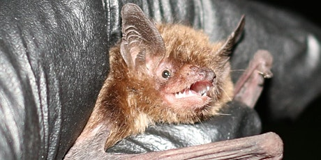 Getting to Know the Bats of Ohio tickets