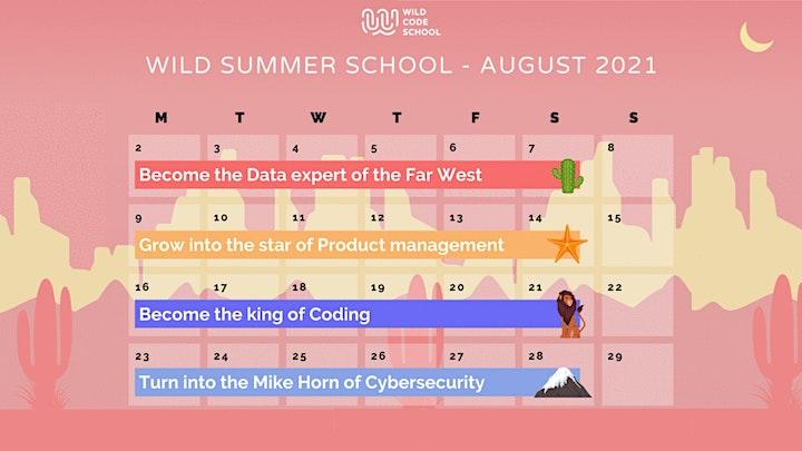 Wild Summer School - Alumni feedbacks on the  Data analyst course! image