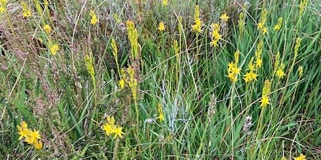 Guided Walk on Glasson Moss National Nature Reserve tickets