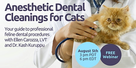 Anesthetic Dental Cleanings for Cats entradas