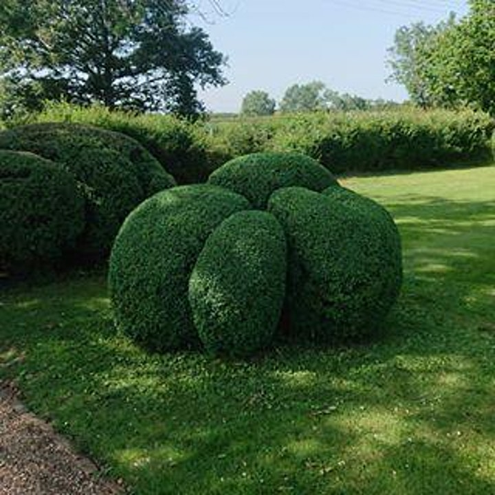 Topiary Composition (Morning, February) image