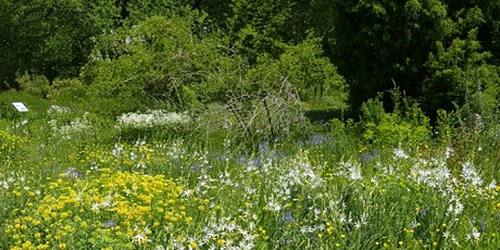 Sommertreff im Botanischen Garten Tickets