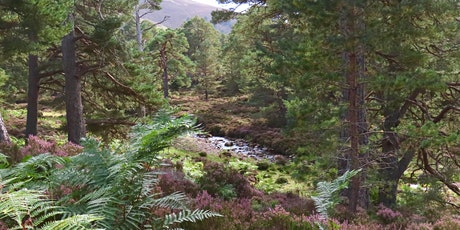 Stories of our Living Rivers and Glens - a free online ceilidh tickets