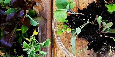 Grow To Sow-- From Brown To Green Thumb (PART II) tickets