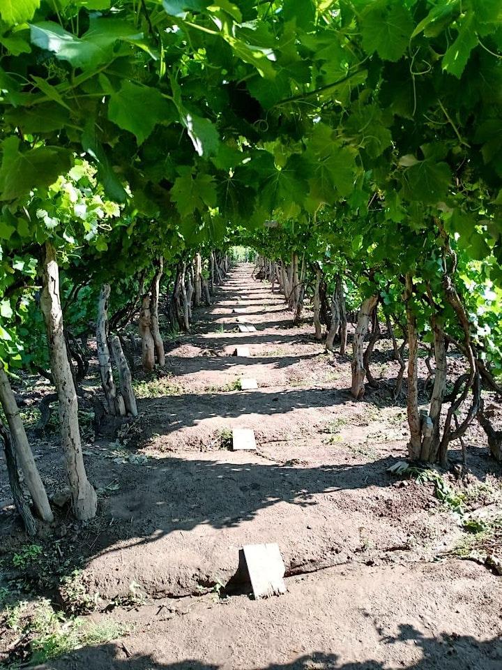 Tour to the vineyards of Mendoza image